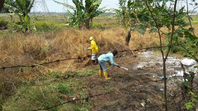Petugas kebersihan pun membersihkan rumput  dan ilalang dilokasi pembuangan limbah