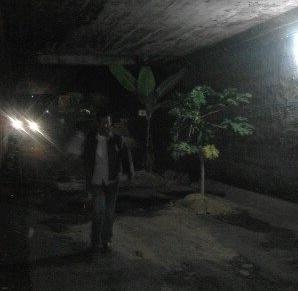 jalan ditanami pohon pisang