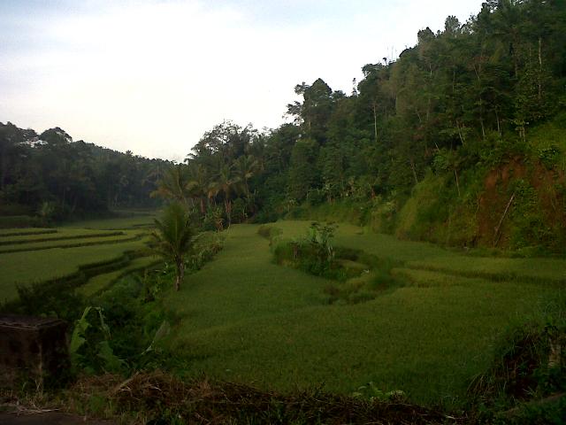 Hamparan Pematang Sawah dengan pemandangan di desa Curuglemo. (Foto: Alex Hine)
